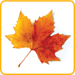 Autumn Leaves Activity