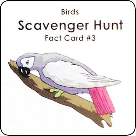 Scavenger Hunt Flashcards